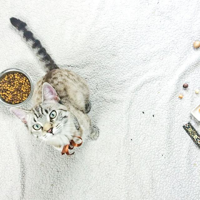 DIY CAT COLLAR & CAT FREE PRINTABLE