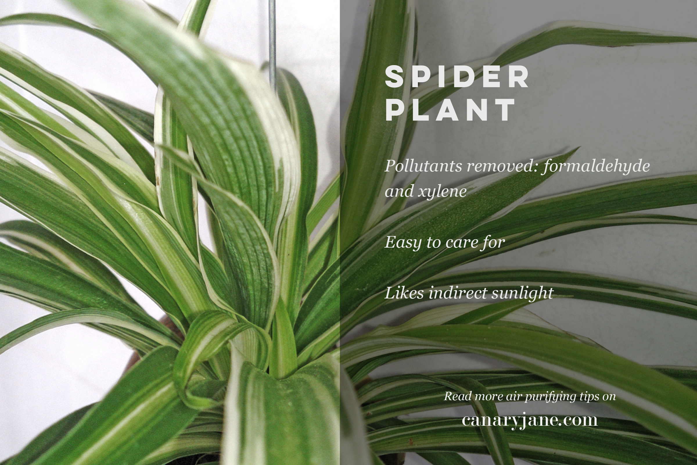 air purifying plants and other natural ways to purify the air