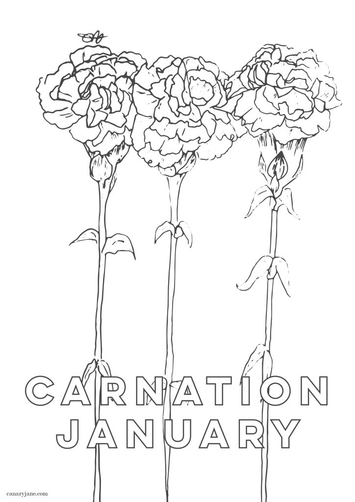 Hand Drawn January Carnation Birth Flower Background Coloring Page You Can Grab For Free Canary Jane
