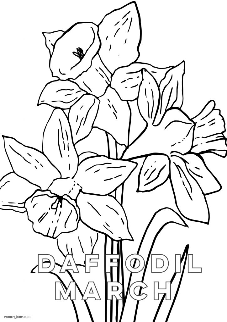 I've got the March free background ready for you! Grab these for your phone, March birth post and add this to your desktop. Grab these free March Daffodil Birth Flower Background & Coloring Page now.