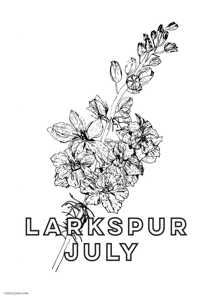 Happy July! To continue our monthly series, I have your free June Larkspur birth flower coloring page and background for you! You can see January through June by clicking the links found below.